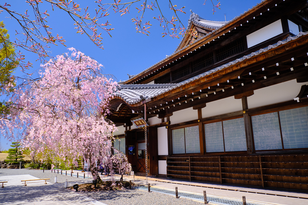 Sakura, at Seiryuden