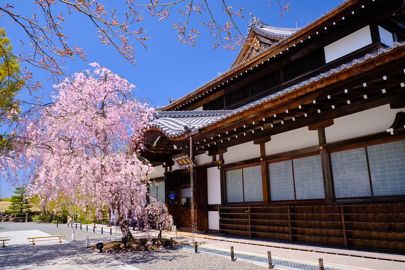 Sakura, at Seiryuden