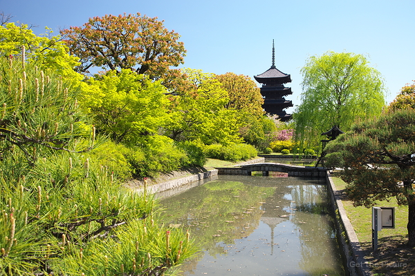Early Spring at Toji Temple