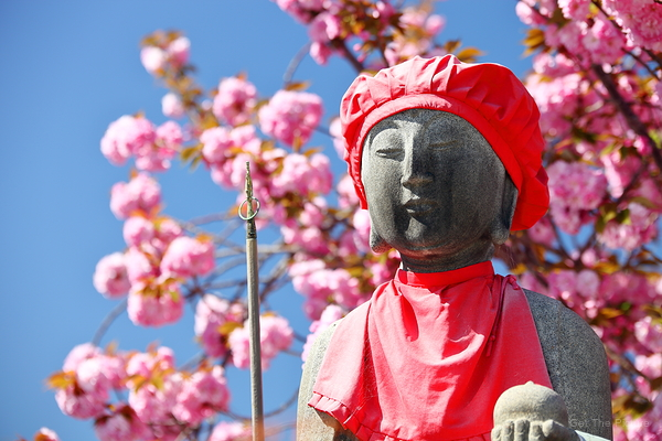 jizou under the blossoms