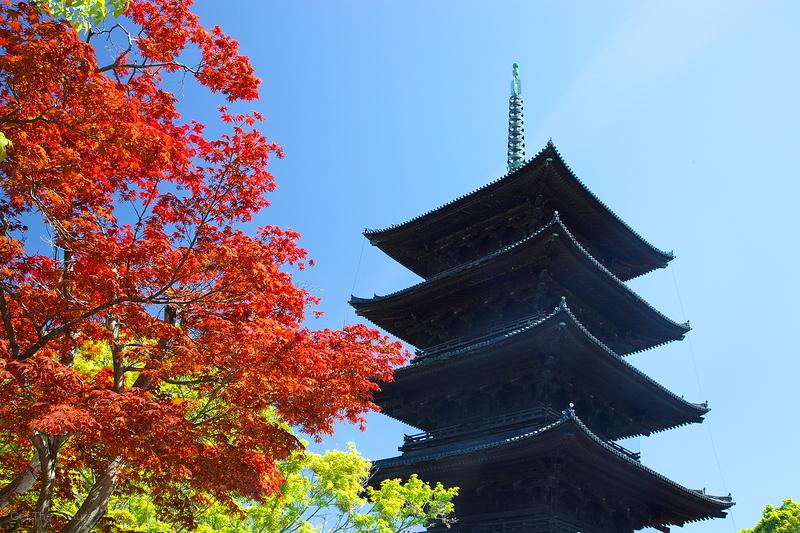 Spring maple, at Toji Temple