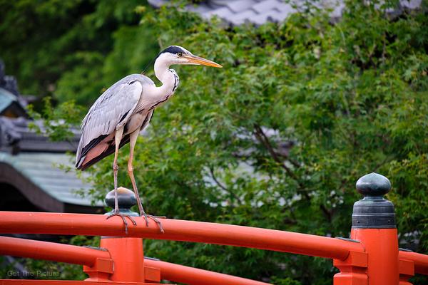 heron on the bridge