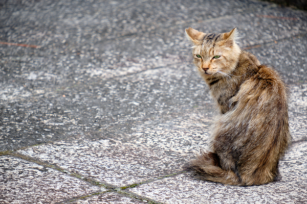 """boss cat - """"Don't mess with me"""""""