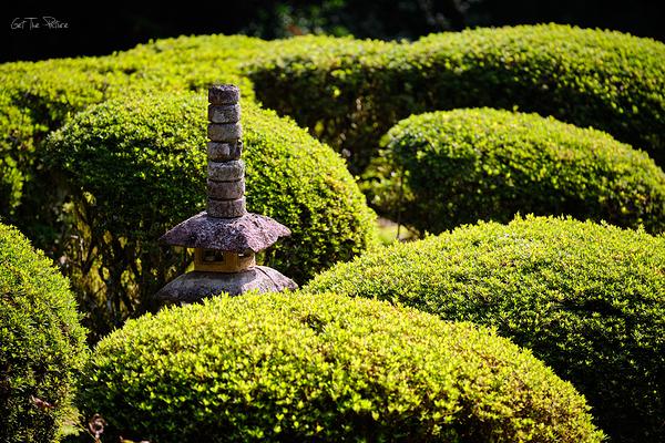 pagoda among the green