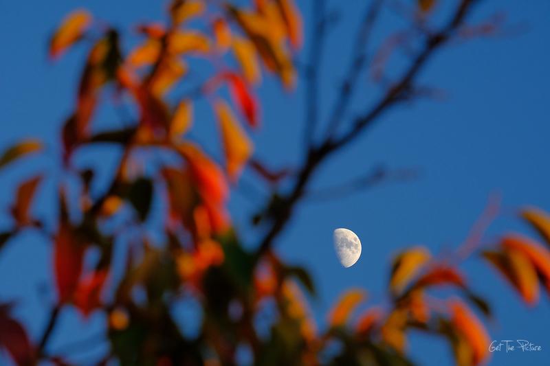 Moon watching in Fall