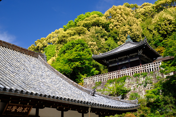 Chion-in among the Spring greens