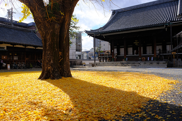yellow carpet at Bukkoji