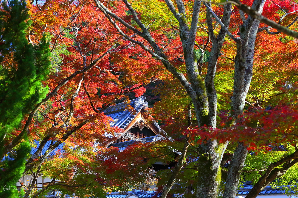 Autumn colour at Nanzenji