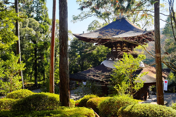 among the trees - the pagoda at Ishiyama