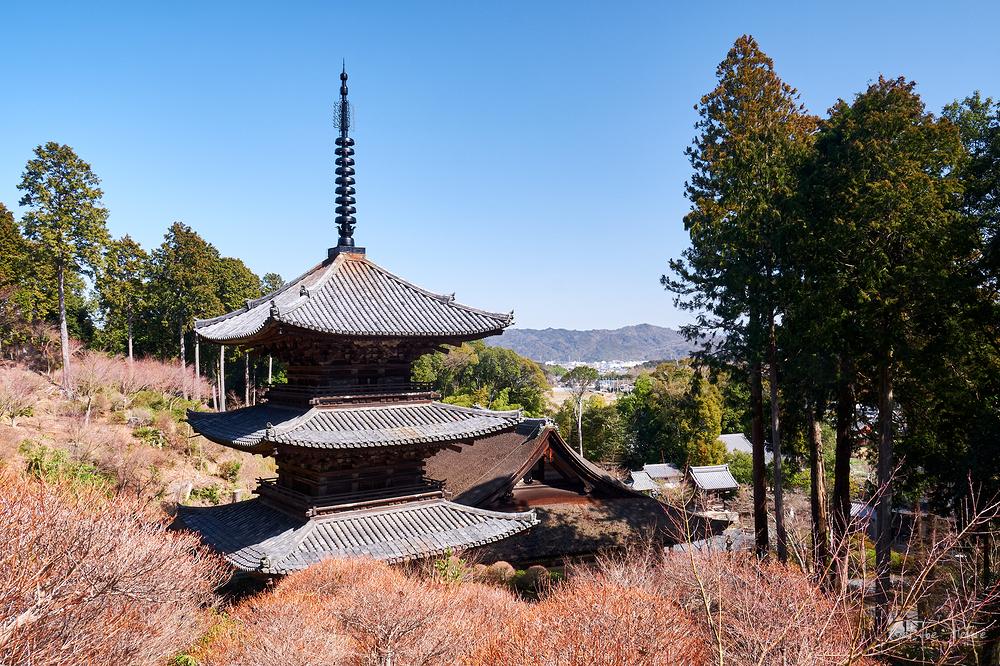 dry winter day at Jorakuji