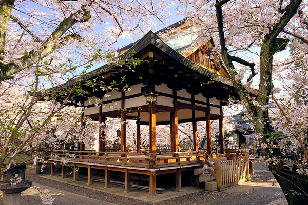 a fresh Spring day at Tenson Jinja