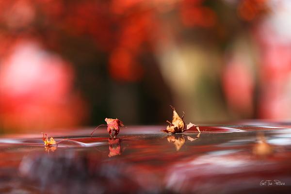 fallen in Fall