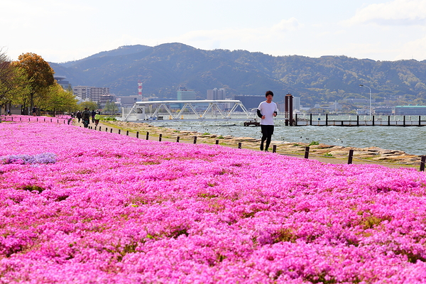 Spring psychedelics on the shores of Lake Biwa