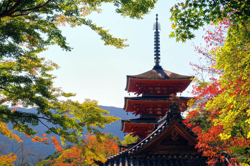 autumn approaches at Hase Dera