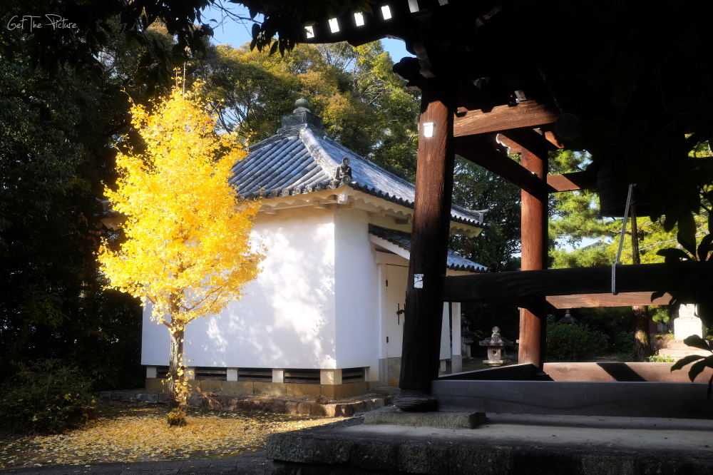 the perfect ginko