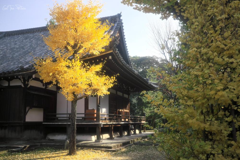 a hidden corner of Chishakuin