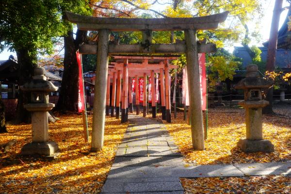 at dawn, Toyokuni Shrine