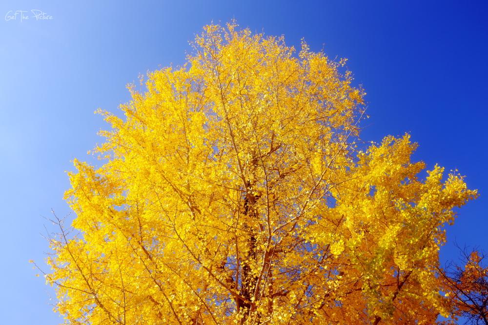 fall splendor