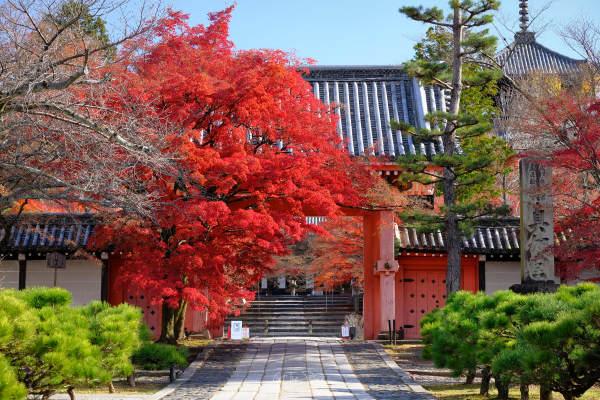 COVID Kyoto in Fall