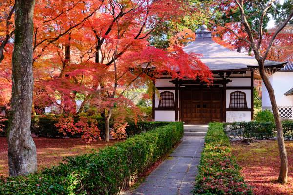 COVID Kyoto, Shinnyodo