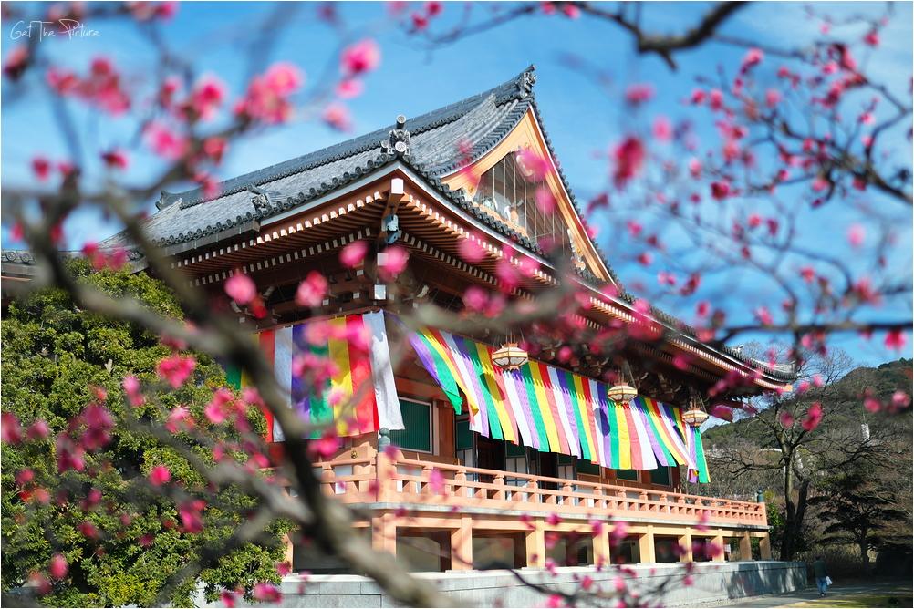 Chishakuin through plum blossoms