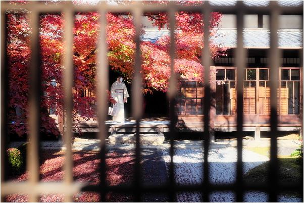 kimono and Fall colours