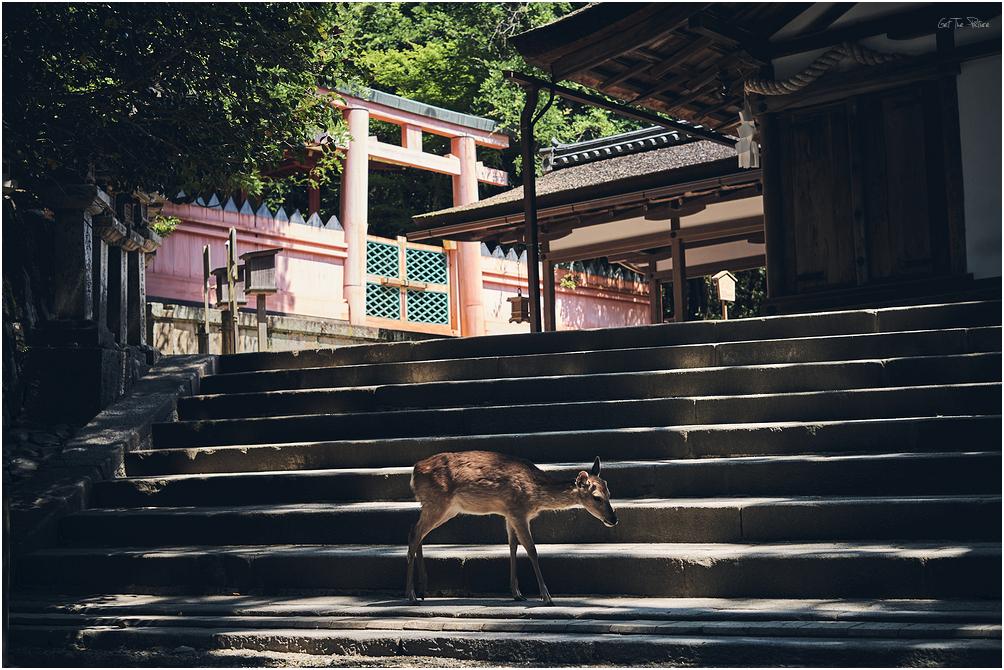 COVID Nara