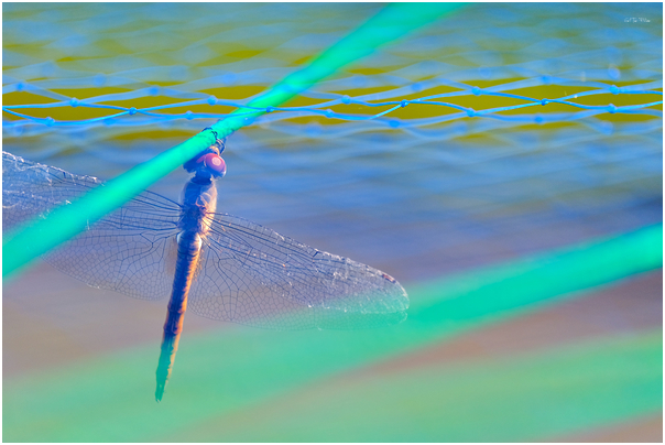 dragon-fly abstract