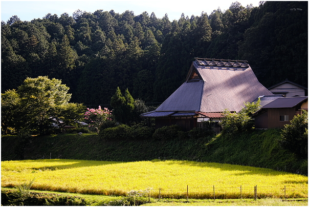 late afternoon - Ohara