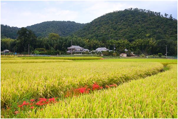 pastures of plenty in Saga Arashiyama, Kyoto