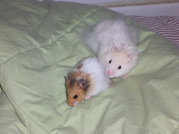 Skuzzball and Booger meet