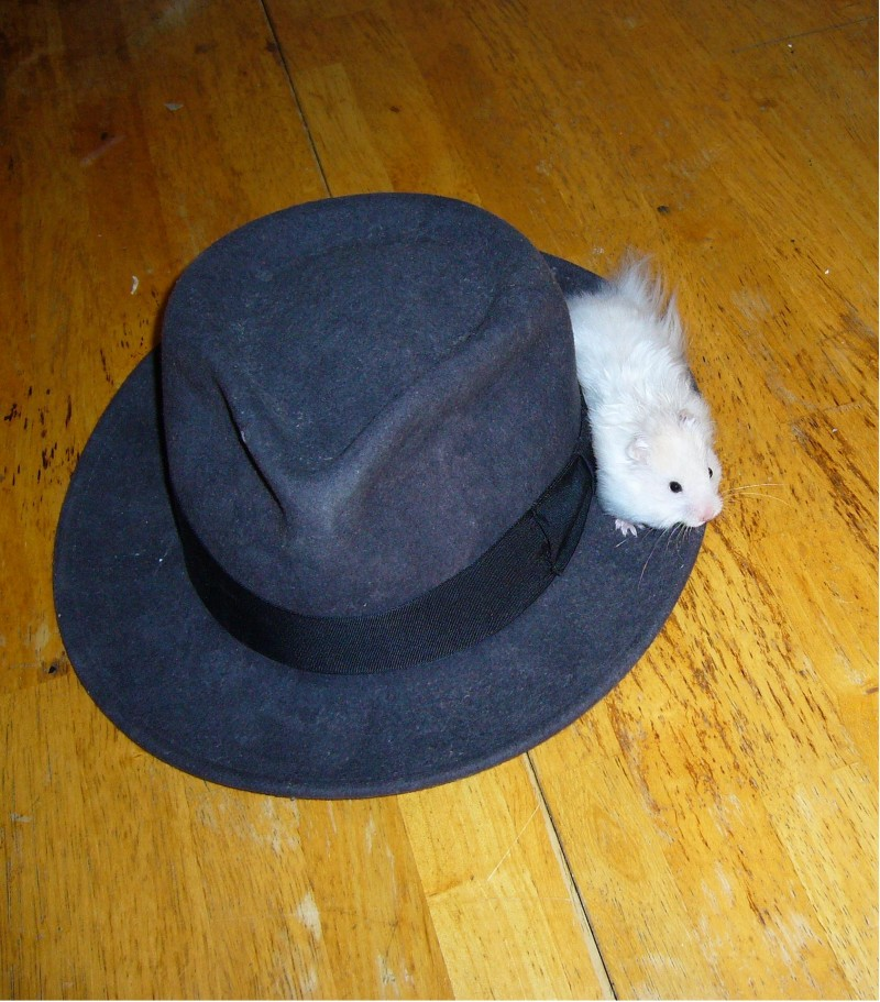 syrian hamster and a hat skuzzball