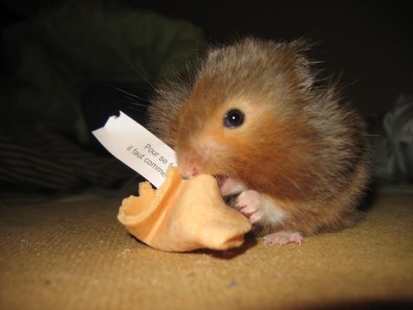 vyvyan hamster hamtastic
