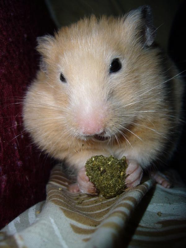 pants hamster cute hamtastic
