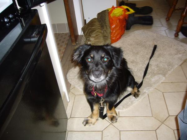 Young Skooch dog.