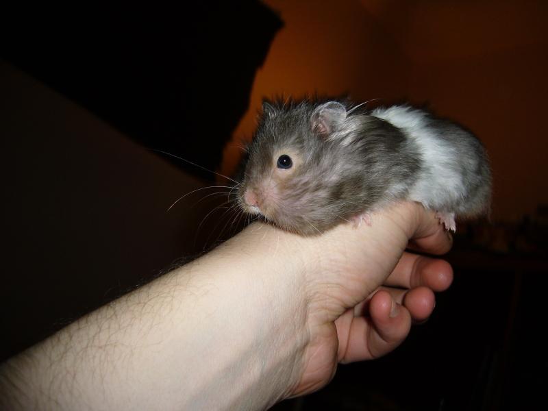 eddie hamster hamtastic