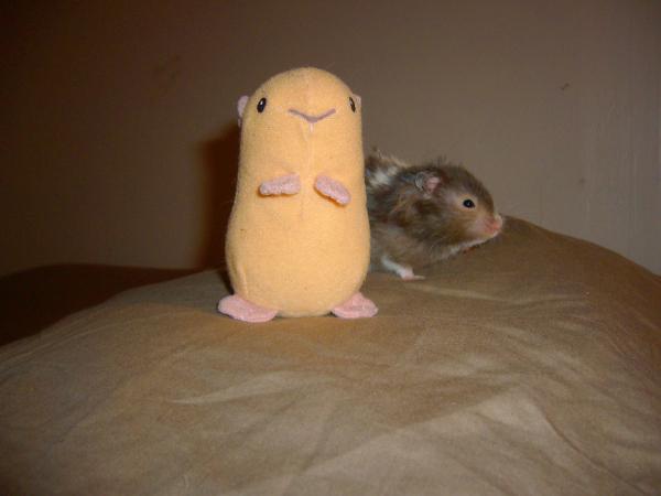 eddie syrian hamster hamtastic cute pants