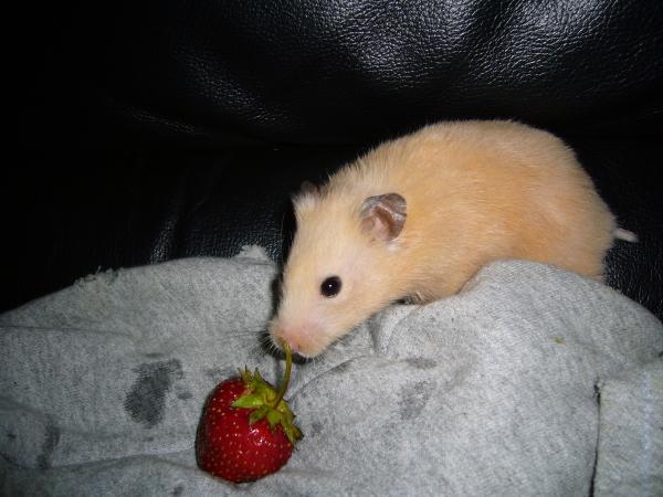 Pants syrian hamster hamtastic cute