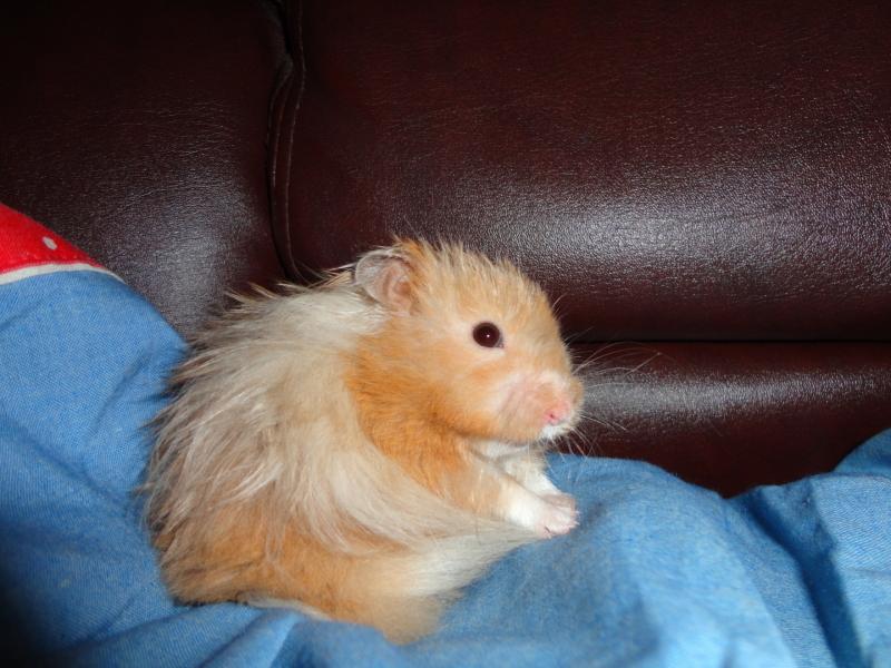 elliot hamster syrian cute hamtastic
