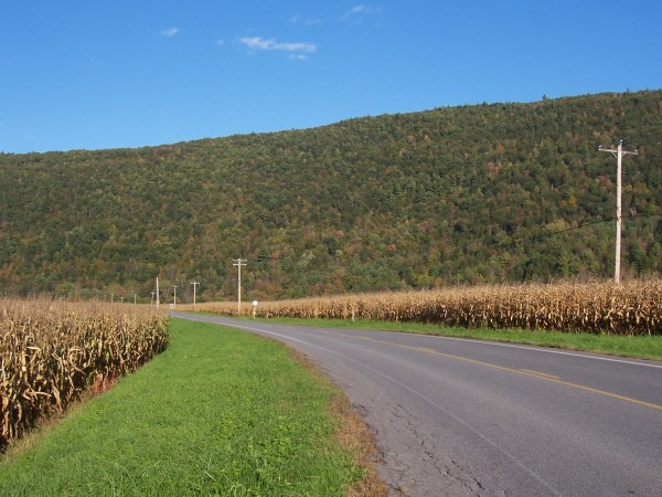 corn-lined route 30 in new york