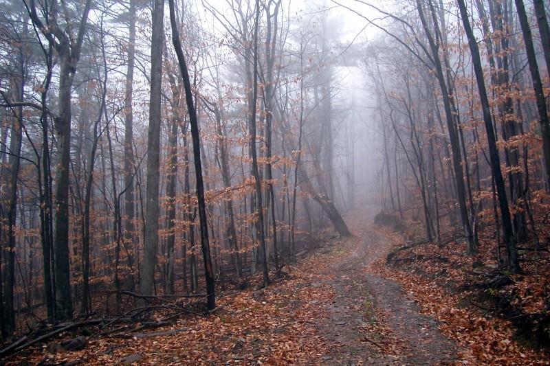 catskills misty rain