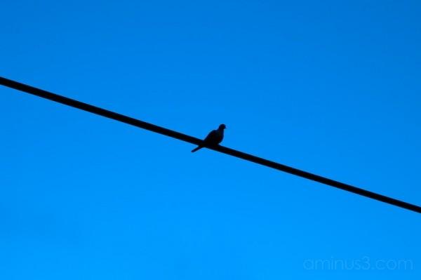 shadow of a bird