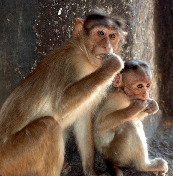 mom and kid monkey