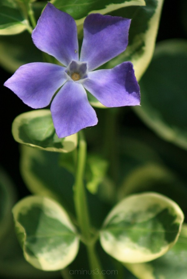 Small purple flower