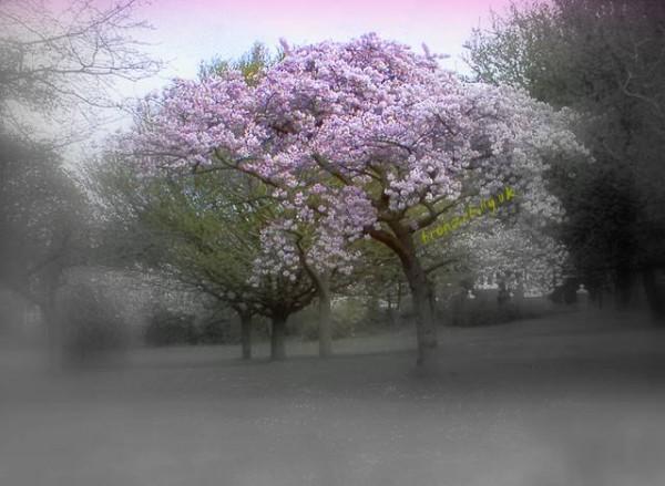 blossom first season