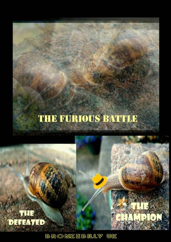 snail fight result