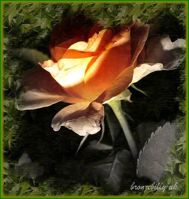 Rose Light