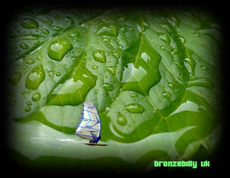 surfing water leaf
