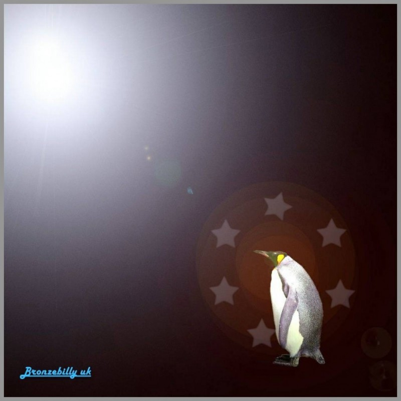 penguin polar pop idol
