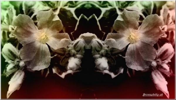 fantasia flower mirror
